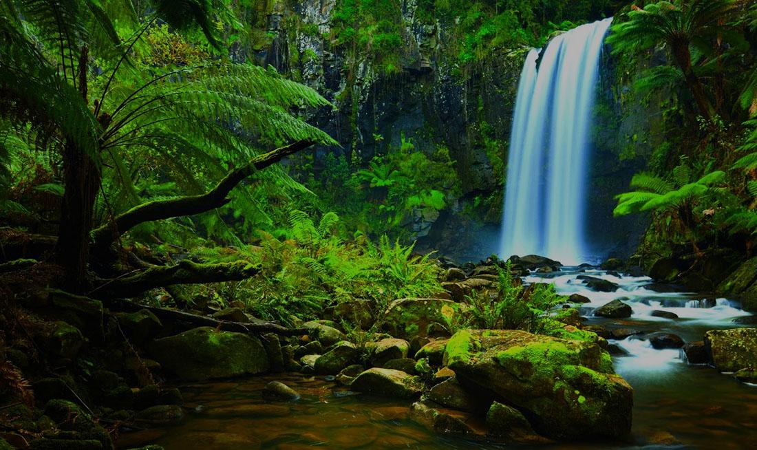 รวบรวมเรื่องน่ารู้ป่าแอมะซอน เสน่ห์ที่ถูกซ้อนไว้