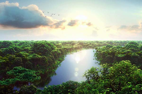 Beautiful of Amazon Forest