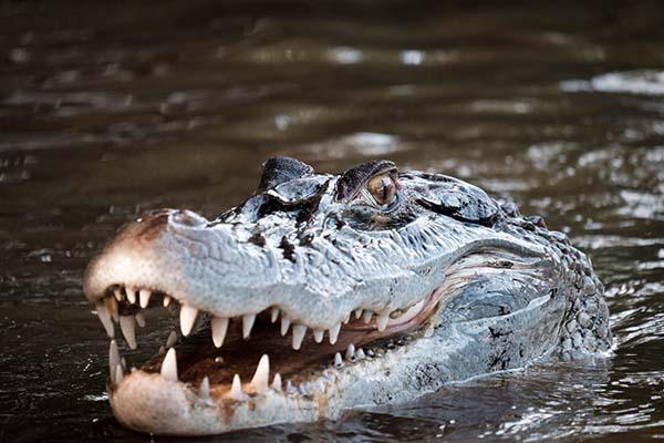 สัตว์ใต้น้ำในป่าอเมซอน