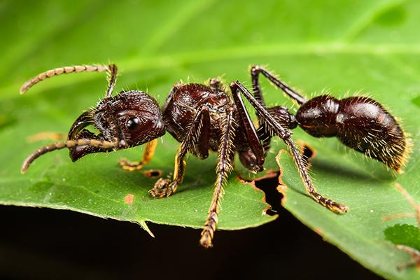 สัตว์ป่าอันตรายในอเมซอน